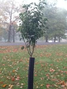 Evy Tree